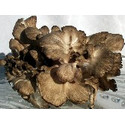 Fresh Maitake Mushrooms Hen of the Woods