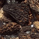 Dried Morel Mushrooms # 2 Grade
