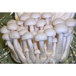 Fresh White Beech Mushrooms