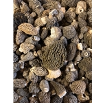Fresh Grey Morels