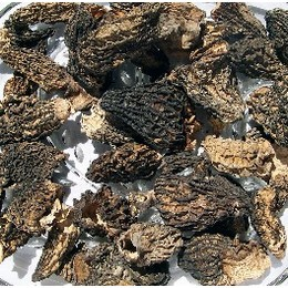 Dried Wild Morel Mushrooms from the USA, Wild Crafted Grade #2