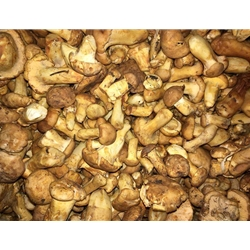 Fresh Wild Chanterelle Mushrooms